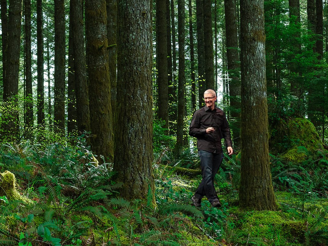 tim-cook-forest-1.png