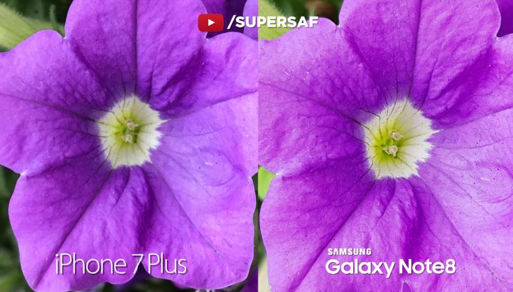 Note 8 Vs Iphone 7 Plus Camera Comaparison 19