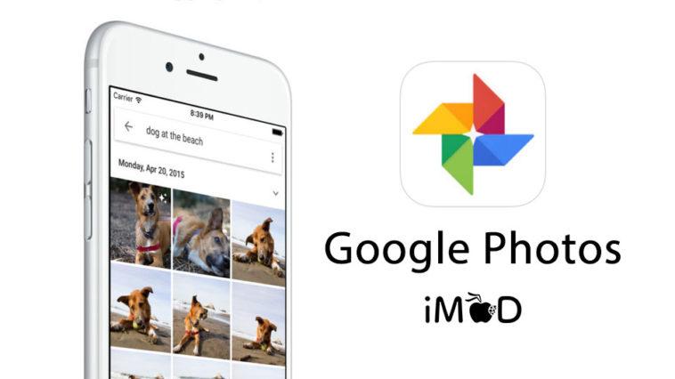 Google Photos App Pet