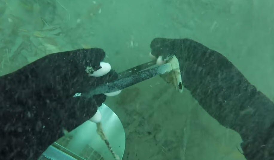Underwater Detected Iphone 6s Plus 1