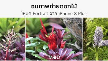 Iphone 8 Plus Portrait Natural Light Mode Flower