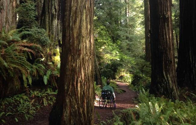 Apple Watch Activity Challenge Redwood National Park 1
