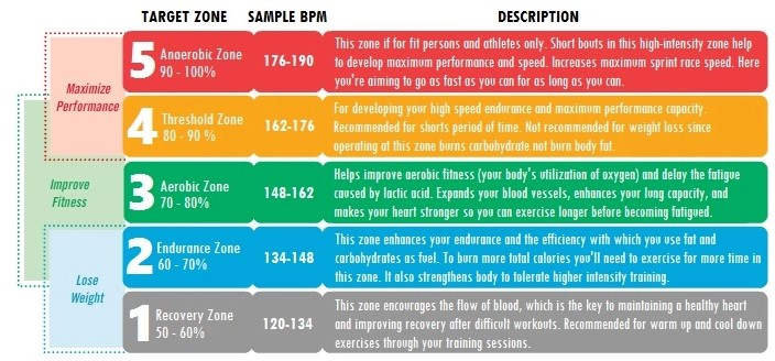 Exercise Control Heart Rate Zone By Zone For Training 9