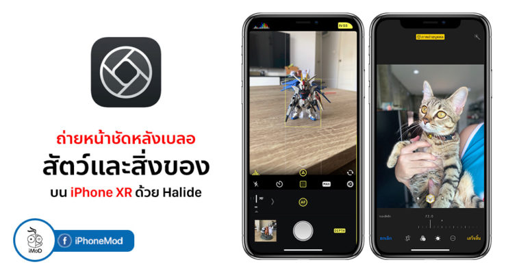 How To Take Portrait Mode With Things Pet On Iphone Xr By Halide Cover